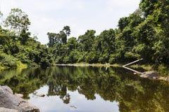 Bomen langs en rotsen in een rivier stock foto