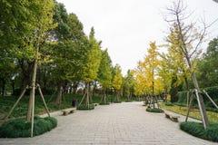 Bomen langs krommemanier in de parkdraai aan geel royalty-vrije stock fotografie