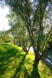 Bomen langs Meer Jarun stock afbeeldingen