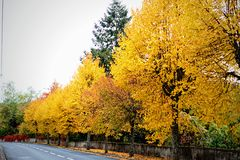 Bomen langs Route Stock Fotografie