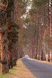 Bomen langs weg Stock Afbeeldingen