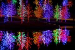Bomen in LEIDENE lichten voor Kerstmis worden verpakt die Royalty-vrije Stock Afbeelding