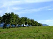 Bomen in lijn Royalty-vrije Stock Foto's