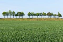 Bomen in lijn op weg Stock Afbeeldingen