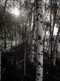 bomen in Londen Royalty-vrije Stock Foto's