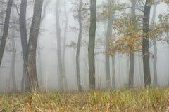 Bomen in magisch nevelig bos Royalty-vrije Stock Afbeelding