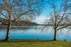 Bomen, Meer en Regenachtiger royalty-vrije stock fotografie