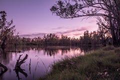 Bomen in Meer Mulwala Australië stock fotografie