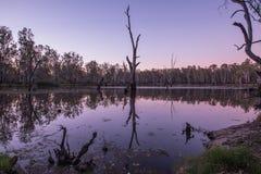 Bomen in Meer Mulwala Australië royalty-vrije stock afbeelding