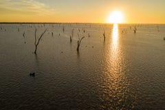 Bomen in Meer Mulwala Australië royalty-vrije stock foto
