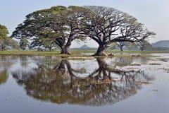 Bomen in meer Tissa Wewa, Sri Lanka worden weerspiegeld dat Stock Foto