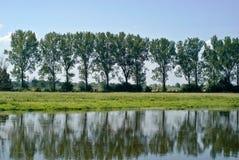 Bomen met bezinning Royalty-vrije Stock Fotografie