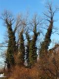 Bomen met bladboomstammen stock afbeeldingen