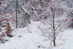 Bomen met bladeren en sneeuw over stock fotografie