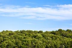 Bomen met Blauwe Hemel Stock Foto