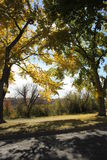 Bomen met dalingskleuren stock foto's