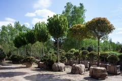 Bomen met de ballen van de jutewortel klaar voor het overplanten Royalty-vrije Stock Fotografie