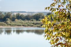 Bomen met de herfstbladeren royalty-vrije stock foto's