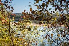 Bomen met de herfstbladeren royalty-vrije stock fotografie