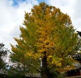 Bomen met de typische de herfstkleuren, China stock foto's