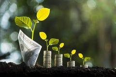 Bomen met geld, besparingen en geld Bomen met geld, besparingen en geld De groei van geld en milieubescherming royalty-vrije stock foto