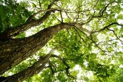 Bomen met groene bladeren royalty-vrije stock afbeelding