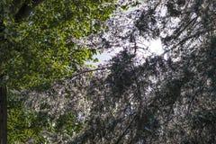 Bomen met groene en witte bladeren Royalty-vrije Stock Afbeelding