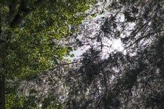 Bomen met groene en witte bladeren Royalty-vrije Stock Foto