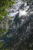 Bomen met groene en witte bladeren Stock Foto