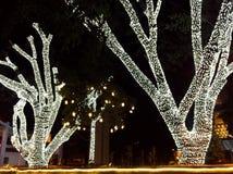Bomen met heldere geleide lichten op de nacht van Kerstavond worden verfraaid die Stock Afbeeldingen