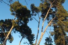 Bomen met hemelachtergrond stock foto