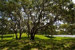 bomen met het hangen van mos Royalty-vrije Stock Foto's