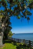 Bomen met het hangen van mos en baai Stock Fotografie
