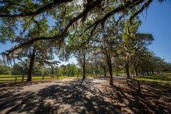 Bomen met het hangen van Spaans mos Royalty-vrije Stock Foto's