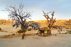 Bomen met kleipotten en kwade oogcharmes in Goreme Cappadocia Turkije Stock Afbeeldingen