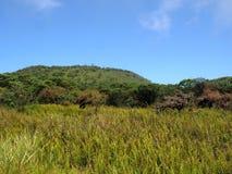 Bomen met korstmossen in de krater van de Cuando-vulkaan van La Roca, Santa Cruz, de Galapagos, Ecuador worden behandeld dat royalty-vrije stock afbeeldingen