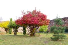 Bomen met levendige kleurenbladeren Stock Foto