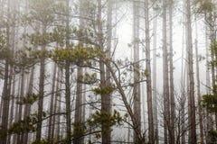 Bomen met mist en mistverschrikkingsaard Royalty-vrije Stock Foto's