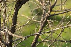 Bomen met mooie bladeren bij zonsondergang Selectieve nadruk blur royalty-vrije stock foto