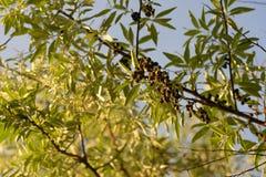 Bomen met mooie bladeren bij zonsondergang Selectieve nadruk blur royalty-vrije stock afbeeldingen
