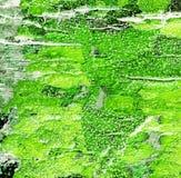 Bomen met mos royalty-vrije stock afbeelding