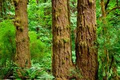 Bomen met mos Stock Afbeelding