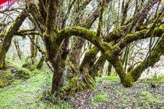 Bomen met mos Stock Foto