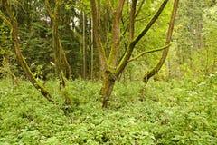 Bomen met mos Royalty-vrije Stock Foto's