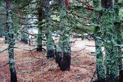 Bomen met mos worden behandeld dat Royalty-vrije Stock Foto