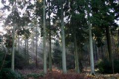 Bomen met ochtendlicht Stock Afbeelding
