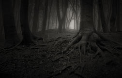 Bomen met reuzewortels in donker achtervolgd bos Royalty-vrije Stock Foto's
