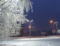 Bomen met rijp dichtbij de weg worden behandeld die Royalty-vrije Stock Foto's