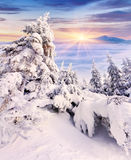 Bomen met rijp en sneeuw in bergen worden behandeld die royalty-vrije stock foto's