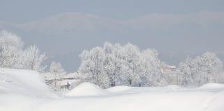Bomen met rijp en sneeuw in de winter op bergenachtergrond die worden behandeld stock afbeelding